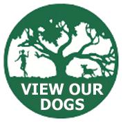 View Our Dogs