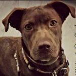Nika – needs foster home!
