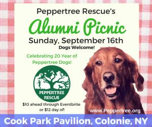 Alumni Picnic @ Cook Park Pavilion