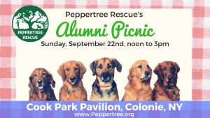 12th Annual Alumni Picnic! @ Colonie Cook Park