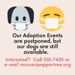 Adoption Events On Hold, Dogs Still Available
